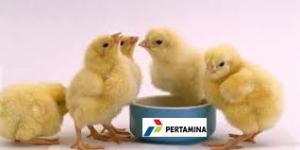 anak ayam dan logo pertamina